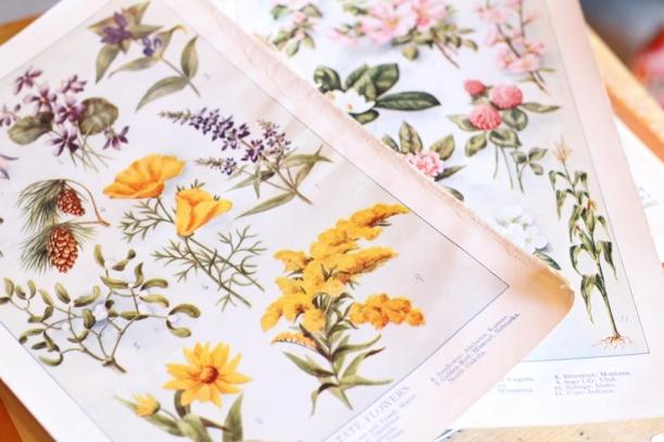 botanicals (1024x683)