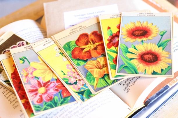 seed packs (1024x683)